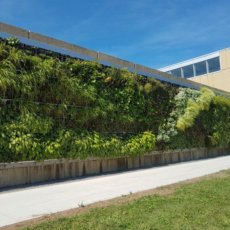 NSCC Exterior Living Wall