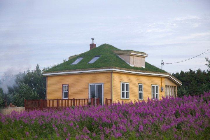 Newfoundland Green Roof