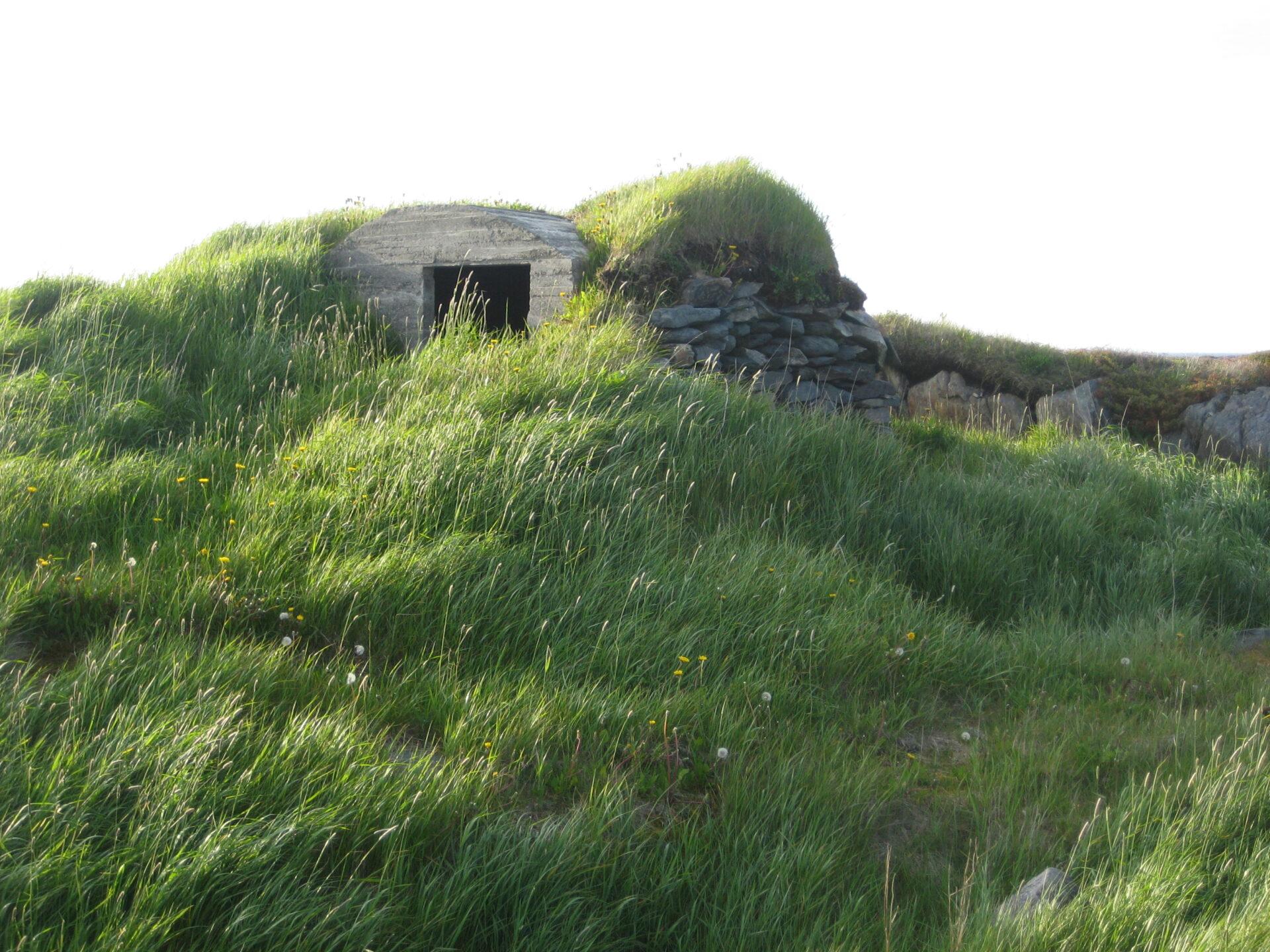 Green Roof Newfoundland 0